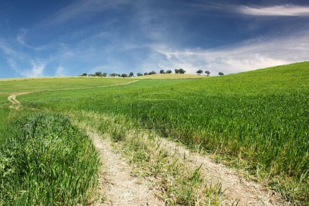 Photo for A dirt road on a hill of green grass with a perfect blue sky with some clouds - Royalty Free Image