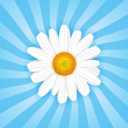 Daisy background...