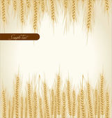 Wheat background natural product