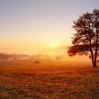 Alone tree on meadow at sunset with sun and mist -...