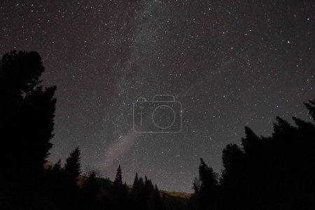 Photo for Silhouette of trees against night sky with stars - Royalty Free Image
