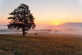 Alone tree on meadow