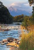 Slowakei Mountain Stream bela