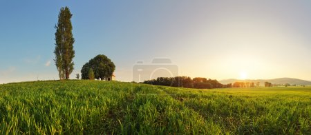 Sunset over green wheat field with path and chapel