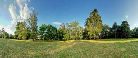 Photo pour Panorama à 360 degrés forest - image libre de droit
