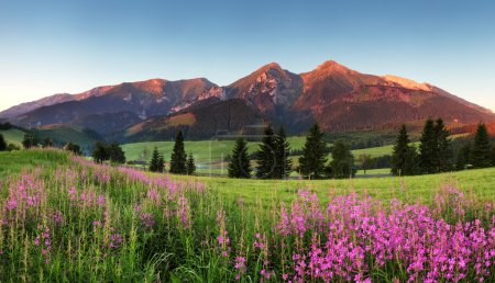 Photo for Beauty mountain panorama with flowers - Belianske Tatry - Royalty Free Image