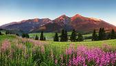 Krása horské panorama s květinami - Slovensko