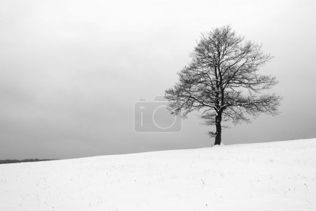 Photo for Tree iin meadow at winter - B&W - Royalty Free Image