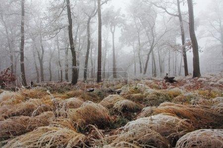 Photo pour Hiver gelés arbre dans la brume à jour - image libre de droit