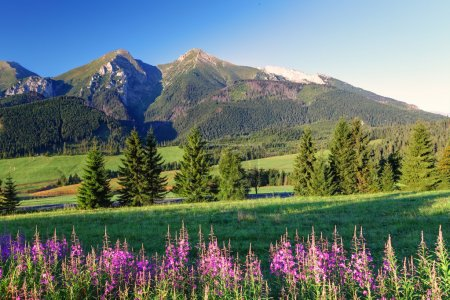 Beauty mountain panorama with flowers