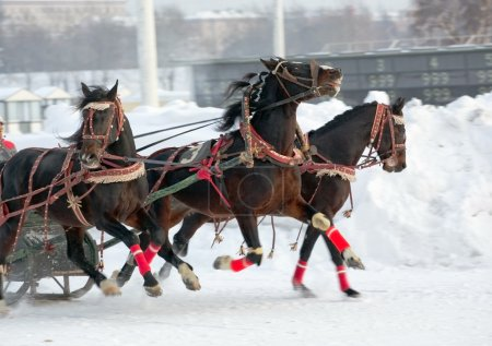 Photo for Three dark horses fast running - Royalty Free Image