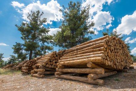 Photo pour Grumes de pin brut, Turquie - image libre de droit