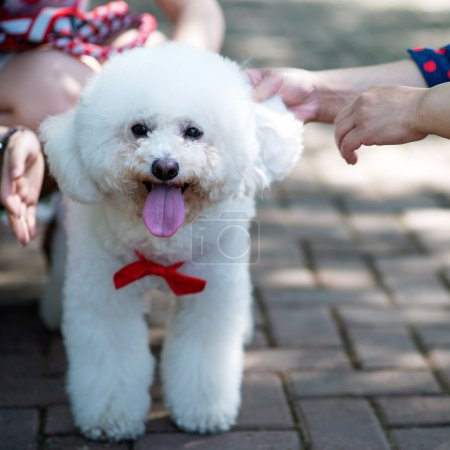 Cuddling pet dog with love