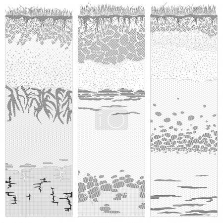 Cut of soil columns (profile).