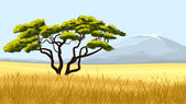 Yellow grass and African acacia
