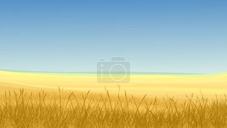 Illustration for Vector horizontal illustration: field of yellow cereals grass against clear blue sky in hot day. - Royalty Free Image