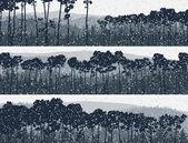 Horizontal banners of winter coniferous pinewood