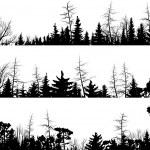 Set of vector horizontal silhouettes coniferous tr...