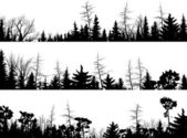 Set of vector horizontal silhouettes coniferous treetops forest (pine spruce cedar)