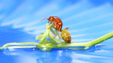 Photo pour Une fourmi reine traverse le pont - image libre de droit