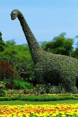 Flowers of National Flower Park...