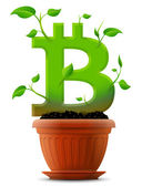 Growing bitcoin symbol like plant with leaves in flower pot