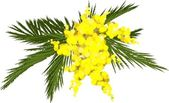 sprig of mimosa blossoms