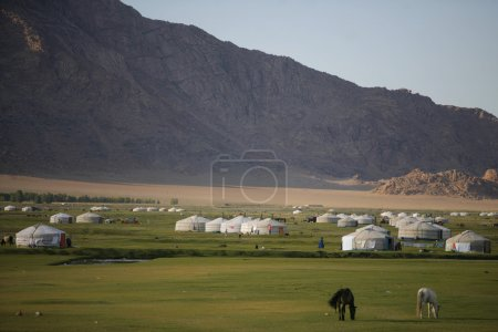 Photo pour Chèvres et yourtes sur un champ vert en Mongolie - image libre de droit