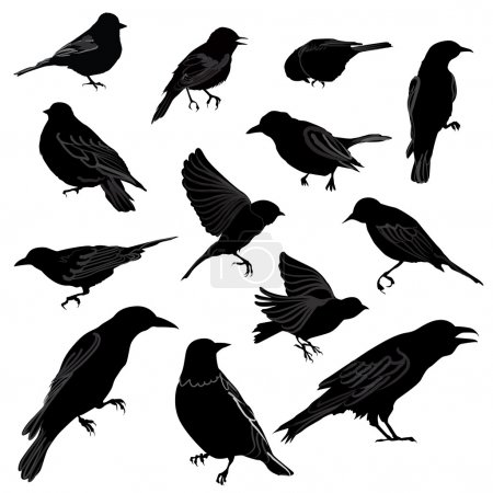 Set of birds silhouette. Vector illustration