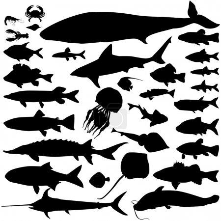 Illustration for River and sea fish silhouette set. Marine fish and mammals. Sea food icon collection. - Royalty Free Image