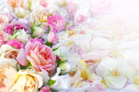 Photo for Roses flowers background. - Royalty Free Image