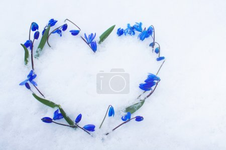 Photo for Beautiful blue snowdrops heart shape on snow. - Royalty Free Image