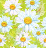 Bezešvé pattern bílé camomiles
