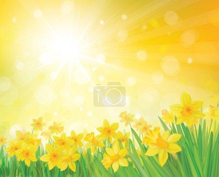 Illustration pour Vecteur de fleurs de jonquille sur fond de printemps . - image libre de droit