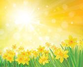 "Постер, картина, фотообои ""Вектор нарцисс Цветы на фоне Весна."""