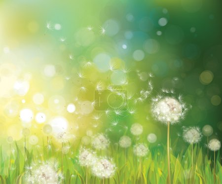 Illustration for Vector of spring background with white dandelions. - Royalty Free Image