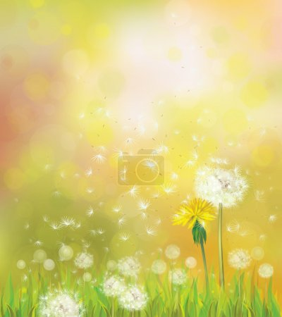Vector spring background with dandelions.