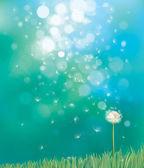 Vektor jara pozadí s bílou Pampeliška