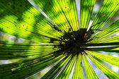 Sun Shines Though a Large Tropical Fern Leaf