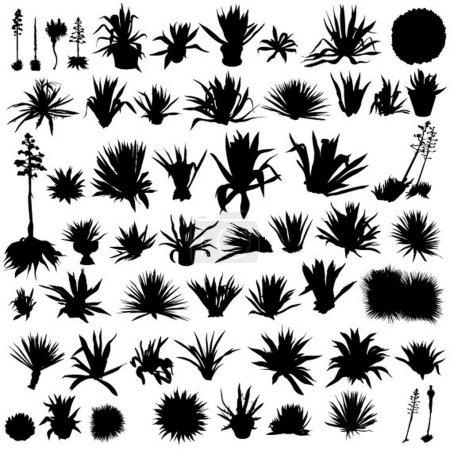 Set of agave plants