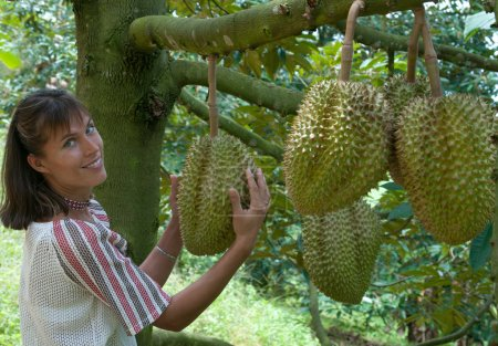 In the durian plantation