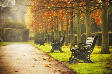 Photo for Old benches in Regent's Park, London - Royalty Free Image