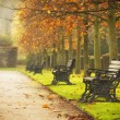 Old benches in Regent's Park, London...
