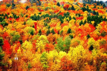 autumn mountain view at cats kill mountain