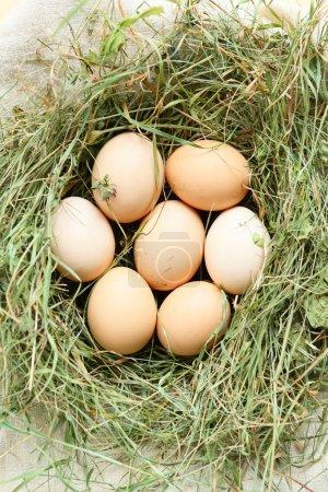 Photo pour Des oeufs frais dans un nid de foin, albums voir aliments - image libre de droit