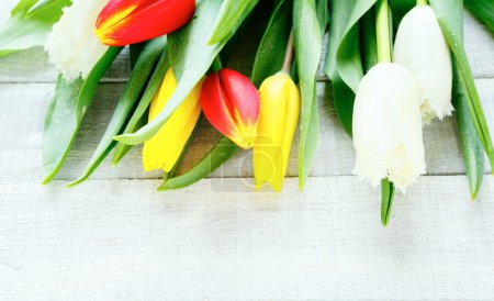 armful of tulips on white boards