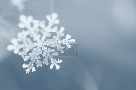 Foto de Invierno, copo de nieve, macro - Imagen libre de derechos