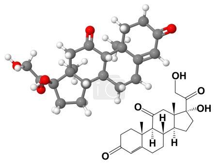 Photo pour Molécule de cortisone avec formule chimique isolée sur fond blanc - image libre de droit