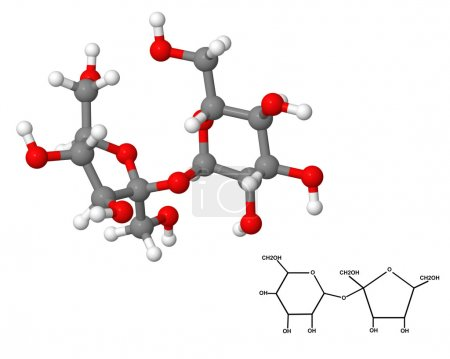 Sucrose molecule with chemical formula
