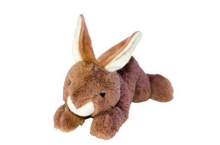 Isolate beautiful plush rabbit